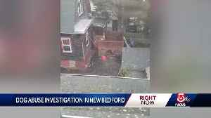 Neighbors say man beat dog with pipe [Video]