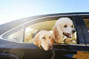 Uber Is Testing a Dog Inclusive Riding Option [Video]