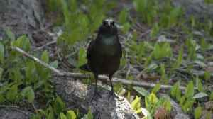Climate Change Threatens Two-Thirds of Bird Species in U.S. [Video]