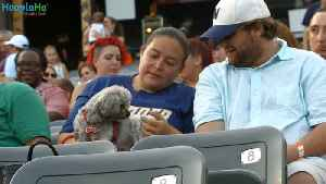 Derby and Rookie - Trenton Thunder Bat Dogs [Video]