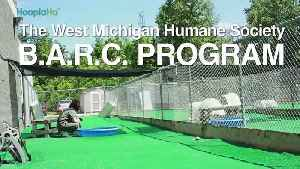 Troubled Youth Learn Compassion By Training Dogs [Video]