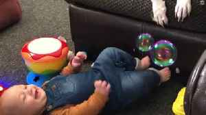 Baby Can't Stop Laughing At Dog Popping Bubbles [Video]