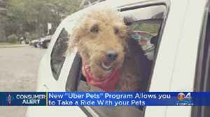 Uber Will Let You Ride With Your Pet [Video]