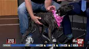 Pet of the week: Rita loves to run, play and meet other dogs [Video]