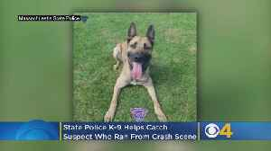 Mass. State Police K-9 Helps Catch Suspect Who Ran Away From Crash Scene [Video]