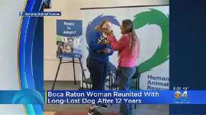 News video: Dog Reunited With Owner 12 Years Later