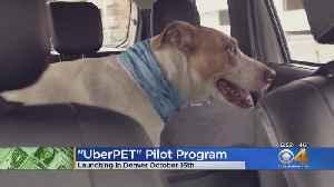 Denver To Test 'Uber Pet' Program Starting Oct. 16 [Video]