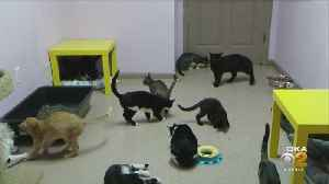 Cats Up For Adoption After Being Rescued From Home In New Kensington [Video]
