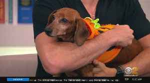 Halloween-Themed Pop-Up For Pet Owners Now Open In Brooklyn [Video]