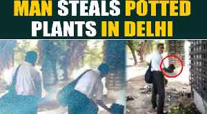 Old man caught on camera stealing potted plants in Delhi, video goes viral | OneIndia News [Video]