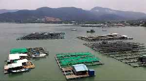 News video: Malaysian fish farmers call on gov't to tackle water pollution