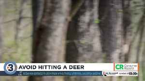 Consumer Reports: Avoid hitting a deer [Video]