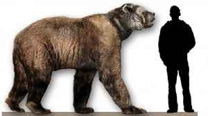Biggest Bear Ever Stood 11 Feet Tall Upright, Could Run 40 Mph [Video]