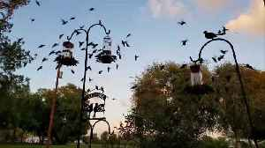 Woman wakes up to hundreds of hummingbirds on her front porch [Video]