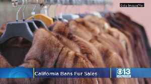 News video: California Bans Fur Sales, Circus Animal Use