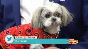 Annual 'Pamper Your Pet' Day! [Video]