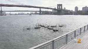 East River Art Informs Public About Water Quality [Video]