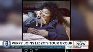 Lizzo's tour crew adopts puppy, draws attention to local animal rescue [Video]