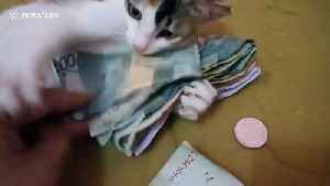 Protective kitten prevents owner from taking money away [Video]