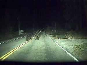 Self-Driving Car Saves Momma Bear and Cubs [Video]