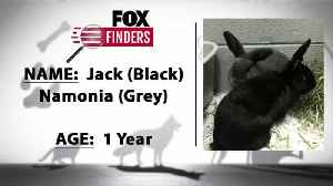 FOX Finders Pet Finder - Jack & Namonia [Video]