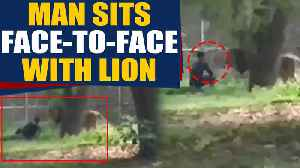 Man jumps inside Lion's Enclosure, sits face to face with lion, video goes viral | OneIndia News [Video]