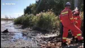 Firemen rescue elderly man trapped in wetland in northern China [Video]