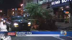 Drenching Rain, Whipping Winds Bring Down Tree In Center City [Video]