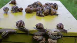 Couple transform their seven-acre home and set up snail retailers [Video]
