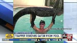 Nearly 9-foot alligator pulled from Florida pool [Video]