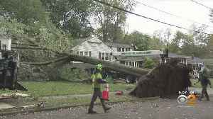 High Winds Topple Trees In New Jersey And Long Island [Video]
