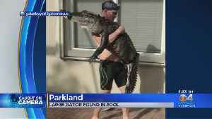 Man Corrals Gator From Parkland Pool [Video]