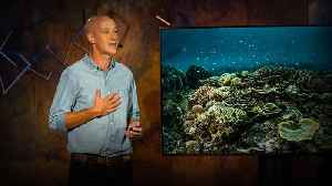 How a handful of fishing villages sparked a marine conservation revolution | Alasdair Harris [Video]