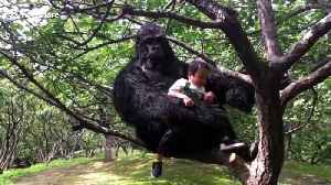 Chinese boy 'walks' father dressed up in gorilla costume [Video]