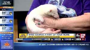 Rescues in Action Oct. 13 | Cuddle up with George [Video]