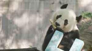 News video: Smithsonian Is Sending Giant Panda Bei Bei To China