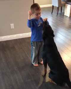 Little Boy Trains Rottweiler With Treats [Video]