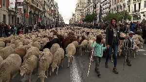 Sheep take over streets of Madrid for annual migration [Video]