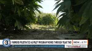 'This is still a high-risk crop': Farmers frustrated as hemp pilot program works through second year [Video]