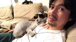 Clingy cat rubs against owner's chest and face [Video]