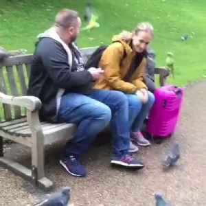 Couple Sitting On Park Bench Feed Multiple Animals At Once [Video]