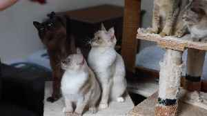 Meet the super-ethical cat breeder who makes a £12,000 loss on her passion [Video]