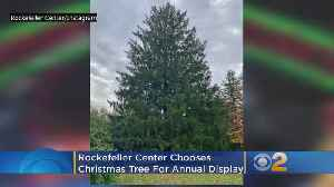 Rockefeller Center Chooses Christmas Tree For Annual Holiday Display [Video]