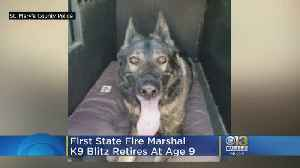 First State Fire Marshal K9 Blitz Retires At Age 9 [Video]