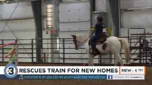 Rescue horses adopted at second annual Midwest Rescue Horse Trainers Challenge [Video]