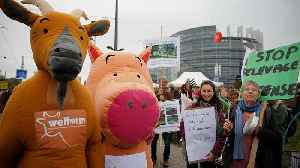 Farmers protest near European Parliament for more sustainable agriculture [Video]