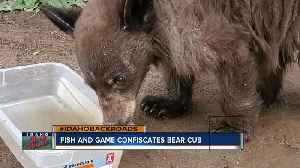 Fish and Game confiscates bear [Video]