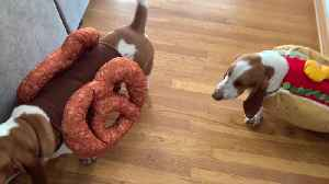 Adorable Dogs Get Dressed As Hot Dog And Pretzel [Video]