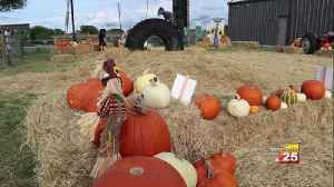 Pumpkin patch helps families celebrate the fall [Video]