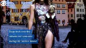 WEB EXTRA: Fashionable Poochies [Video]